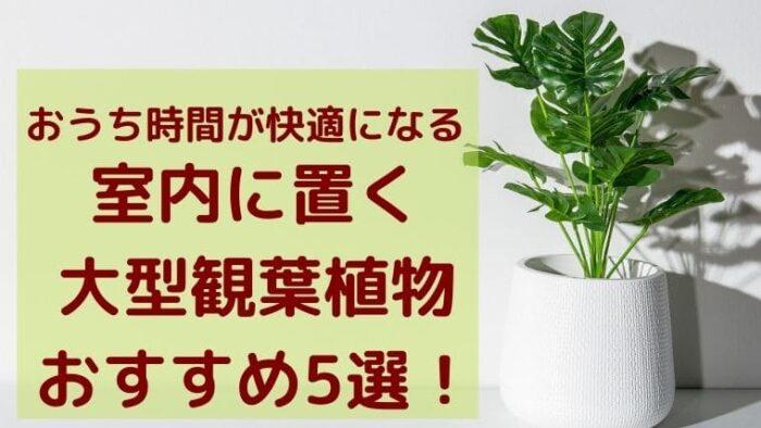 室内に置く大型観葉植物